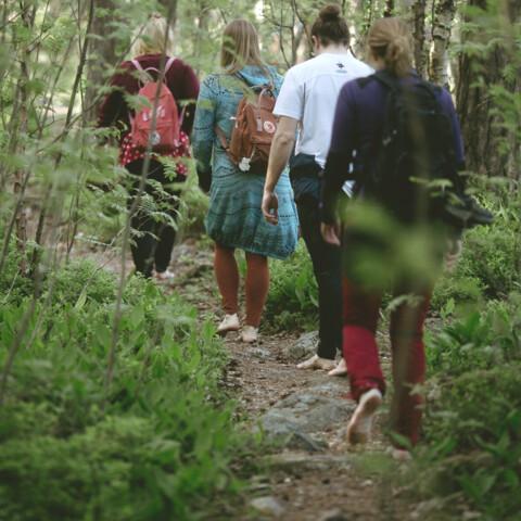 Forest Mind Wellness Walk