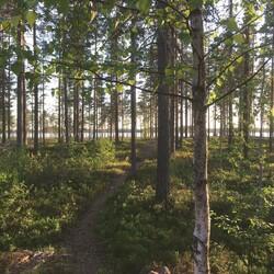 Metsänhenkien mailla