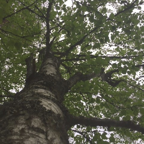 Rentouttava ja virkistävä Metsäkylpy