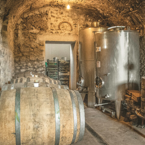 Half Day Wine Tour in Frascati