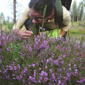Forest Walk in Low Lands, Rovaniemi