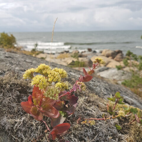 Archipelago Hike in the Scenery of Bothnian Sea National Park