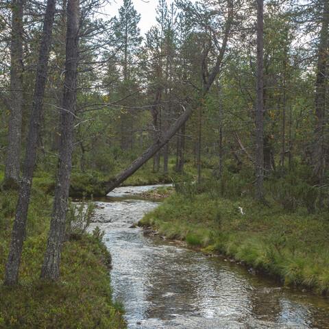 Escape into a Finnish National Park