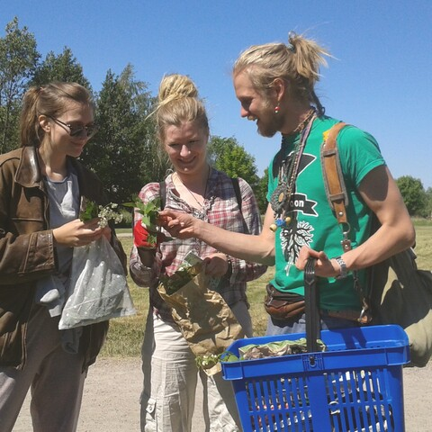 Nature, wild herb and mushroom tours/courses