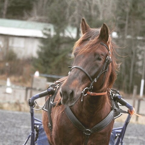 Learn to Drive a Horse & Carriage!