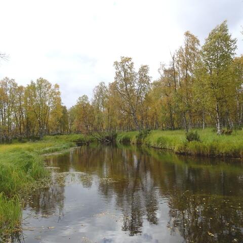 Canoe trip to Tankajoki (self-guided)