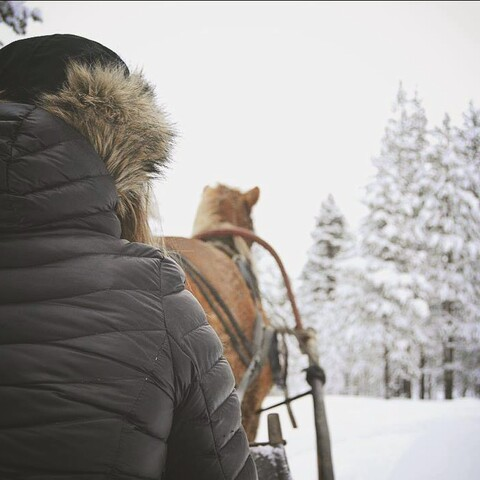 Horse sleigh ride in the fell Lapland