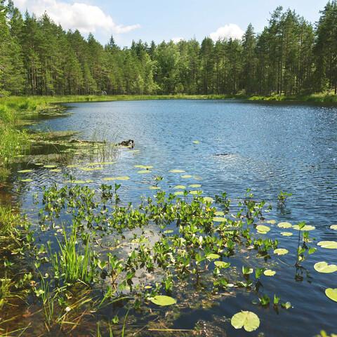 Mindful Forest Walk
