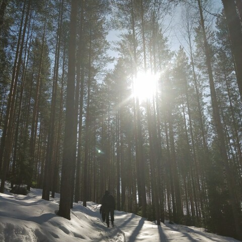 foRest - wondering, walking and breathing in forest