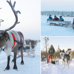 Arctic experience with Huskies, reindeer and snowmobile sledges