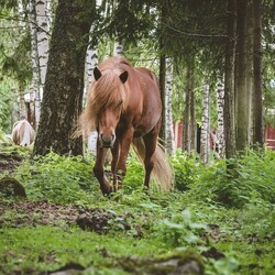 A Mindful Moment with Horses