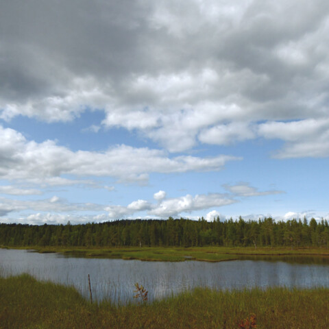 Nature walk with local biologist in Inari