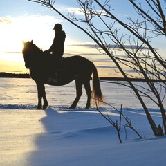 Horseback riding in the arctic hill scenery