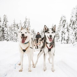Private visit to husky home and 10km sled ride