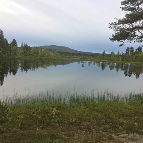 Day trip to the landscapes of Fell-Lapland
