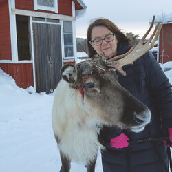 Walking with the reindeer