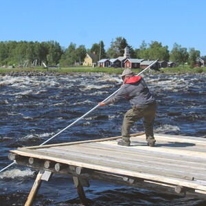 Catch and cook your own whitefish on a skewer, Tornio