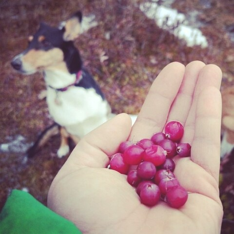 Picking wild food