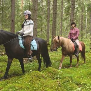 Horseback trail riding - Advanced riders, Kitee