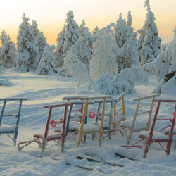Kicksled safari in Karelian wilderness