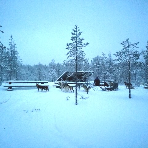Dog sled safaris in the wilderness. Kuohusuo tour 15 km.
