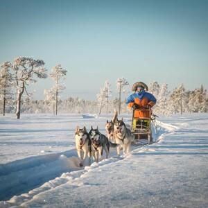 Be a musher! 25km husky ride, Rovaniemi