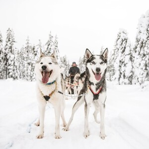 Private visit to husky home and 10km sled ride, Rovaniemi