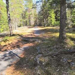 Trail running/running