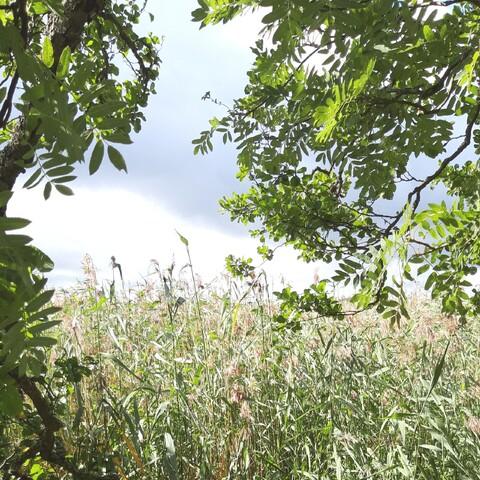 Luontoretki Porvoossa