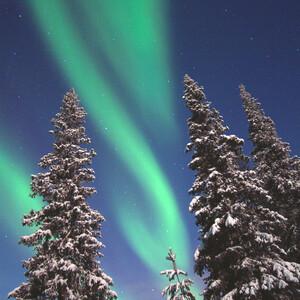Aurora hunting, Rovaniemi