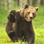 Karhunkatselu Lentiirassa