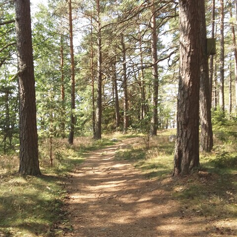 Forestwalk