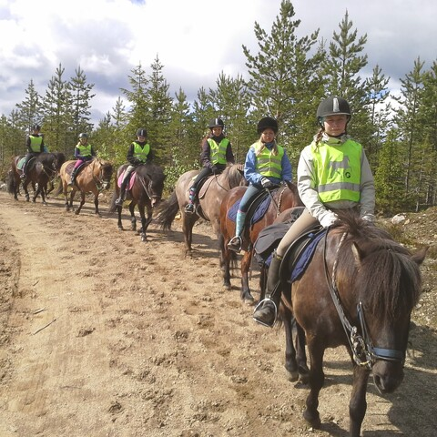 Icelandic Horse Riding Trek in Finnish Nature