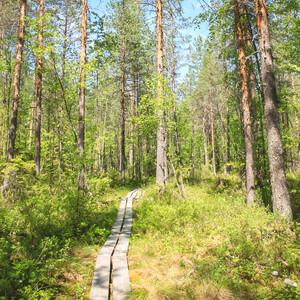 Seasonal Nature Trip, Jyväskylä