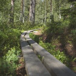 Elämyksellinen Torronsuon kansallispuisto