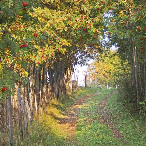 Nature trail hike in Ilomantsi