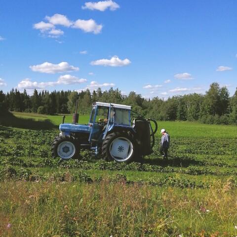 Organic farm mid-summer life