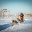 Be a musher! 25km husky ride