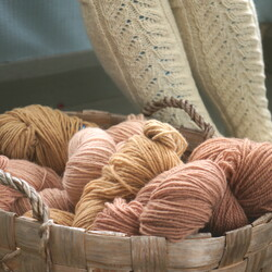 Natural dyeing with plants and mushrooms