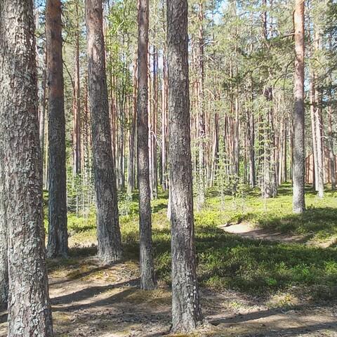 Metsäkellintäretki