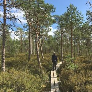 Patikkakierros Kurjenrahkan kansallispuistossa, Turku