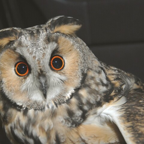Owl experience in Ruissalo