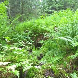 Traditional forest path Lemmenpolku