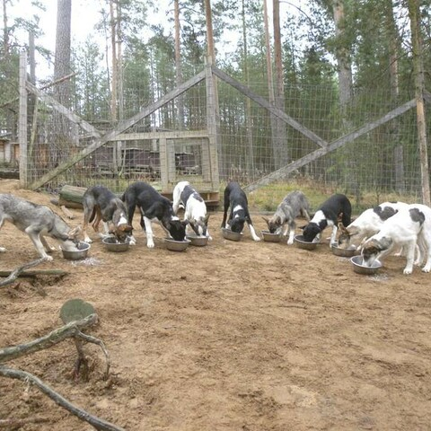 Kennel-Visit and Swiss Lunch