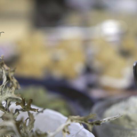 Wild herb workshop
