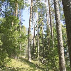 Ohjattu luontoretki Mäntyniemen kartanon maisemissa