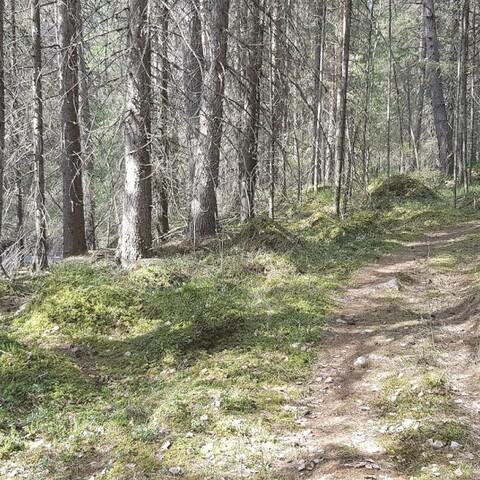 Virran juoksua ja metsän kuisketta Isterinkoskella