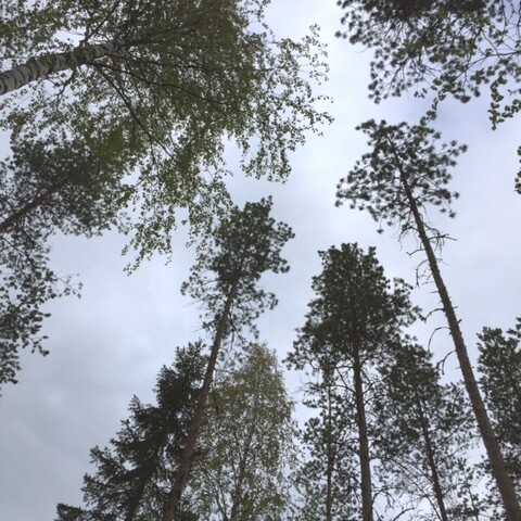 Relaxiting and refreshing Forest Bathing