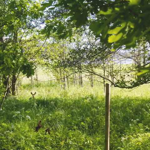 Katariinanlaaksossa nautit upeasta luonnosta
