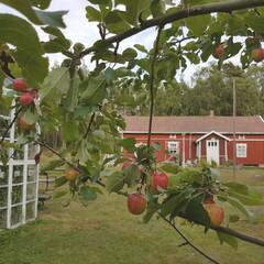 Saaristopäivä Päivärannan tilalla Nurmeksen saaressa (Rauma)